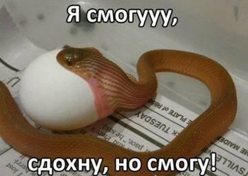http://se.uploads.ru/t/vBsI5.jpg