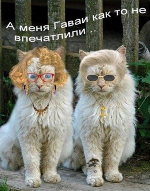 http://se.uploads.ru/t/w1CMu.jpg