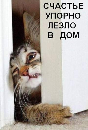 http://se.uploads.ru/t/wAYIU.jpg