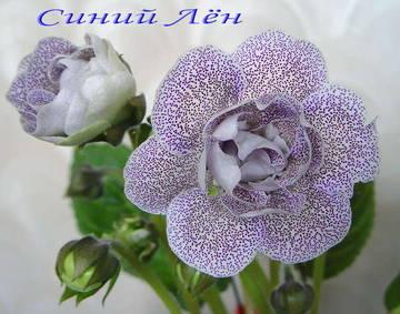http://se.uploads.ru/t/wbtLk.jpg