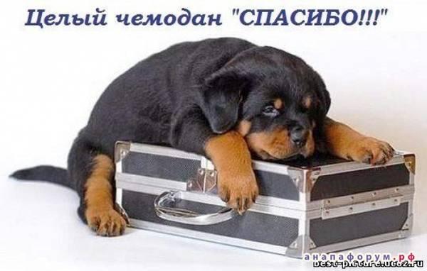 http://se.uploads.ru/t/xMJTj.jpg