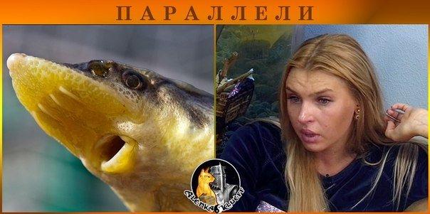 http://se.uploads.ru/yFVKN.jpg