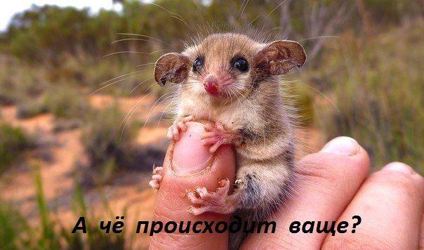 http://se.uploads.ru/zmTME.jpg