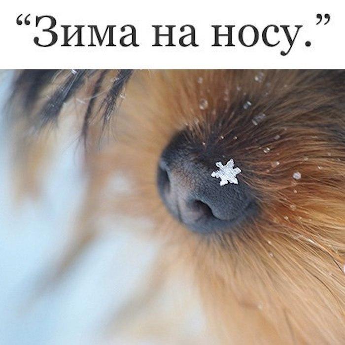 http://se.uploads.ru/VPDrt.jpg