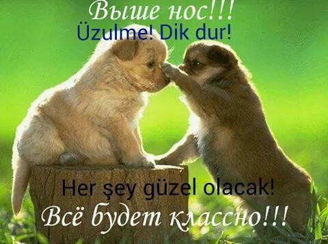 http://se.uploads.ru/dL6AW.jpg