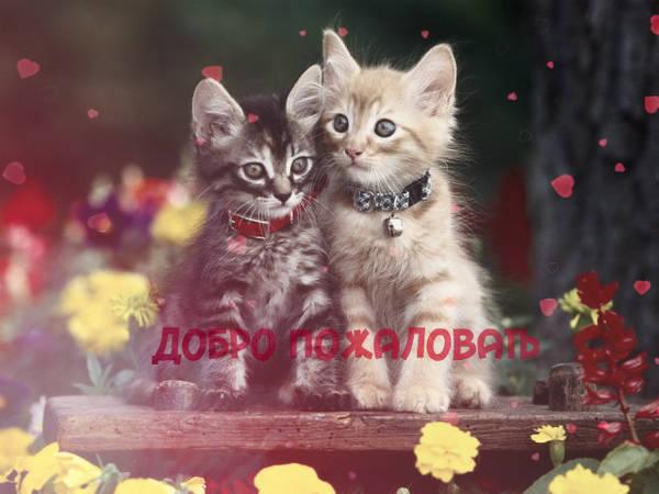 http://se.uploads.ru/t/FDq5W.jpg