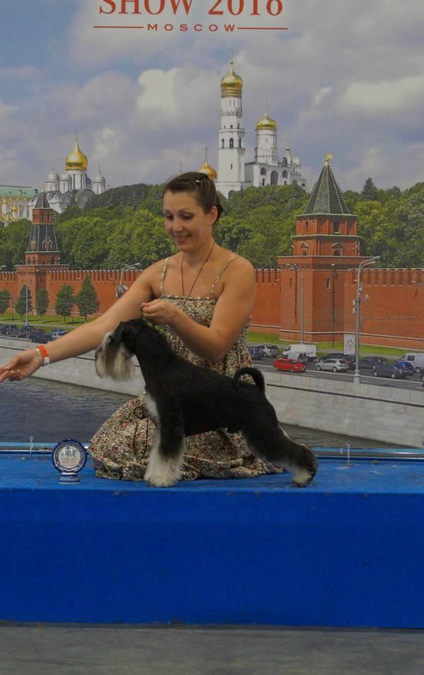 http://se.uploads.ru/t/NIwAe.jpg
