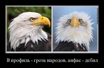 http://se.uploads.ru/t/eN6vq.jpg